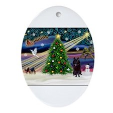 Xmas Magic & Schipperke Ornament (Oval)