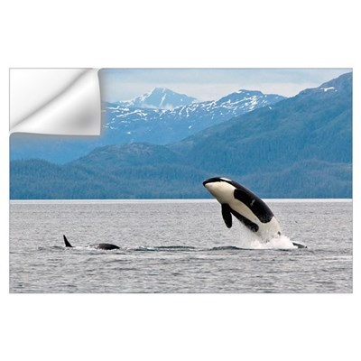 View of an Orca from the AT1 Transient Pod jumping Wall Decal