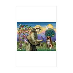 St Francis/ Aus Shep Posters