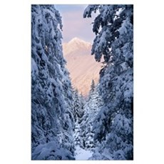 Winter scenic of snow covered spruce trees and Chu Poster