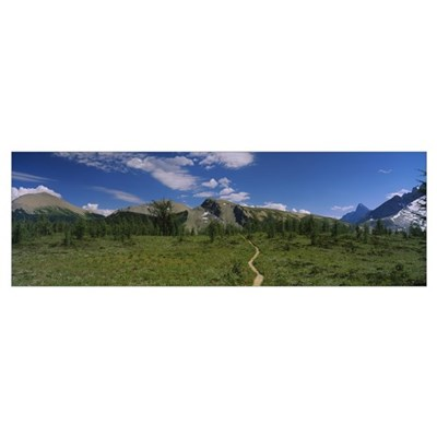 Path on a field, Kootenay National Park, Canadian Poster