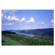 Vineyard Keuka Lake Finger Lakes Region NY