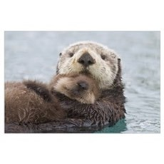 Female Sea otter holding newborn pup out of water, Poster