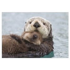 Female Sea otter holding newborn pup out of water,