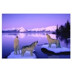 Group of Howling Wolves Winter Poster