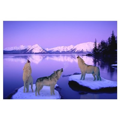 Group of Howling Wolves Winter Canvas Art