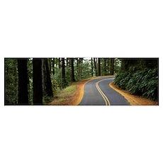 California, Marin County, road Poster