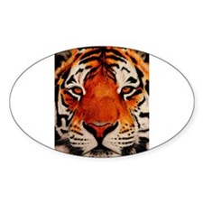 Cute Tigers Decal