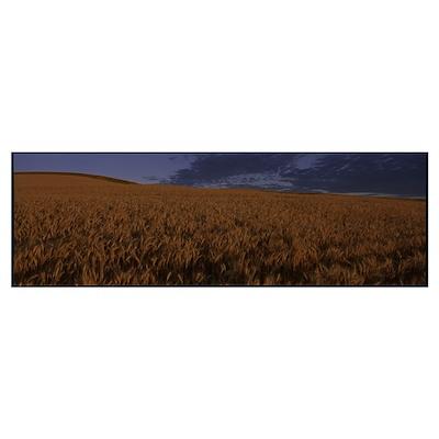 Field of Wheat WA Poster