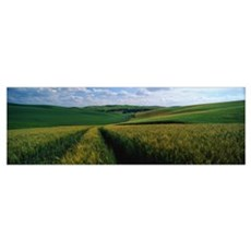 Wheat Fields Palouse WA Poster