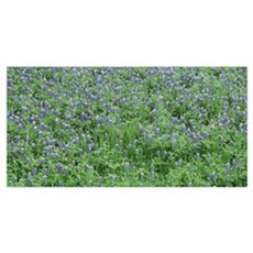 High angle view of a grassy field, Texas Blue Bonn Poster