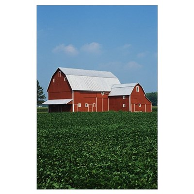 Barn and Corn Field Poster