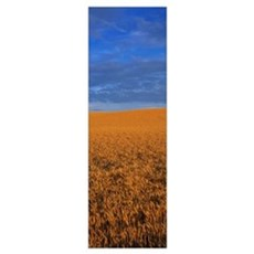 Clouds Over a Wheat Field Poster