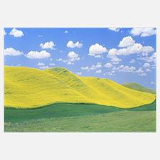 Washington, Whitman County, fields of barley, lent