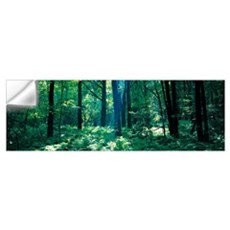 Forest Broome County NY Wall Decal