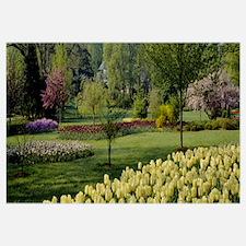 Tulip flowers in a garden, Sherwood Gardens, Balti