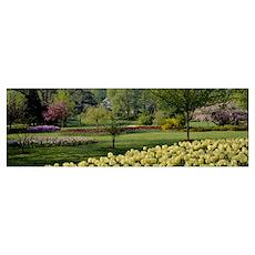 Tulip flowers in a garden, Sherwood Gardens, Balti Poster