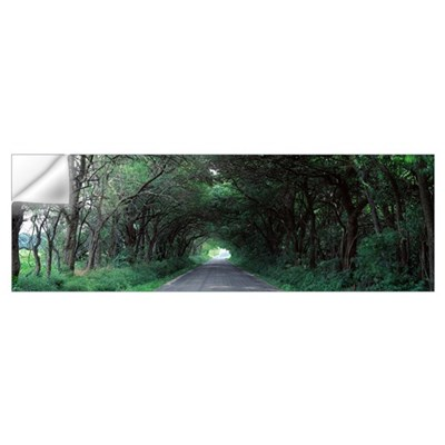 Road through trees Marion Co IL Wall Decal