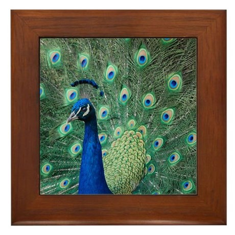 Peacock 5428 - Framed Tile