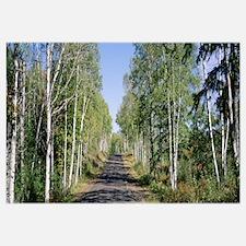 Trees along a roadside, Brockway Mountain Drive, K