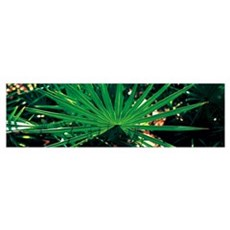 Green Palm Leaf Applachacola FL Poster