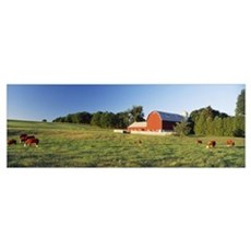 Red Barn Cattle Kent County MI Poster