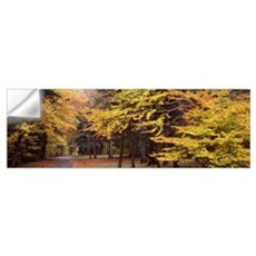 Trees in a park Chestnut Ridge County Park Orchard Wall Decal