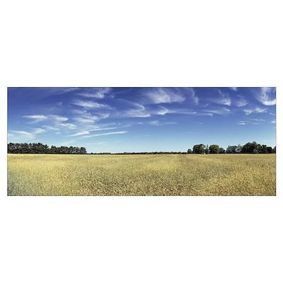 Crop in a field Upper Peninsula Michigan Poster