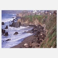 Elephant seals on the beach San Luis Obispo County