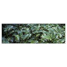 Tropical plants in a botanical garden Sunken Garde Poster