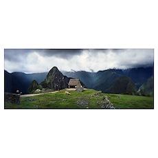 Alpacas Vicugna pacos grazing in a field Machu Pic Poster
