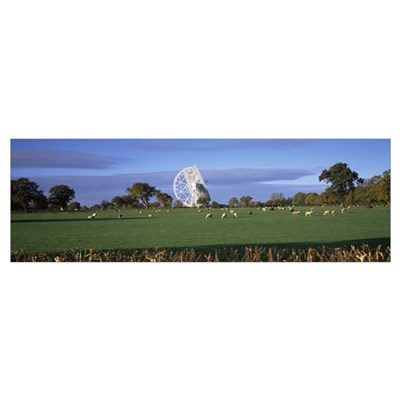 Radio telescope and sheep in a field Jodrell Bank Framed Print