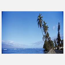 Palm trees on the coast Lahaina Maui Hawaii
