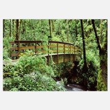 Bridge in a forest Bridal Veil Falls Oregon Columb