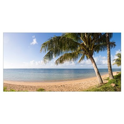 Palm trees on the beach, Anini Beach, Kauai, Hawai Poster