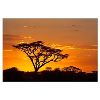 Silhouette of trees in a field, Ngorongoro Conserv Framed Print