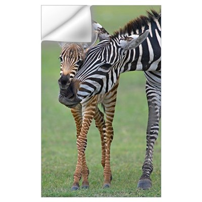 Zebra and its foal in a field, Ngorongoro Conserva Wall Decal