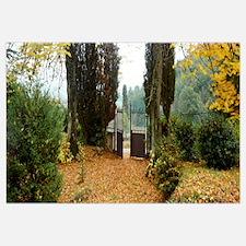 Trees near a gate, La Poderina, Tuscany, Italy