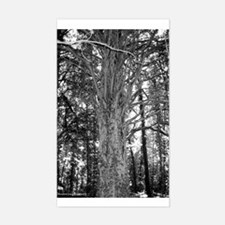 MP Cemetery Tree Rectangle Decal