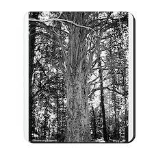 MP Cemetery Tree Mousepad