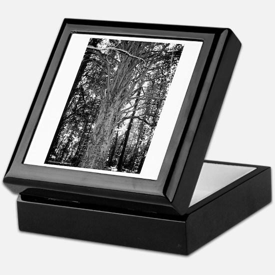 MP Cemetery Tree Keepsake Box