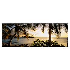 Palm trees on the coast, Kohala Coast, Big Island, Poster