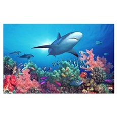 Low angle view of a shark swimming underwater, Ind Poster