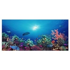 School of fish swimming near a reef, Indo-Pacific Framed Print