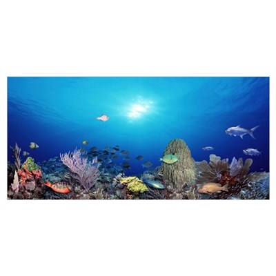 School of fish swimming in the sea Canvas Art