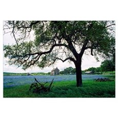 Back Lit Tree At Edge Of Wildflower Meadow Poster