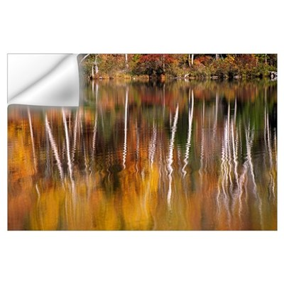 Birch Trees Reflected In Water Wall Decal