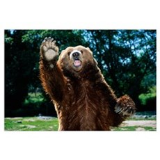 Grizzly Bear On Hind Legs Canvas Art
