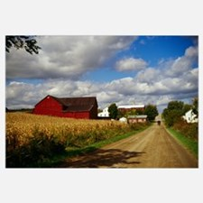 Amish farm buildings and corn field along country