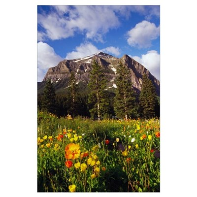 Poppies and wildflowers blooming in front of mount Poster